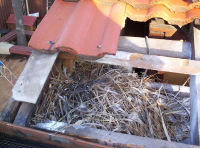 Bird nest in the roof